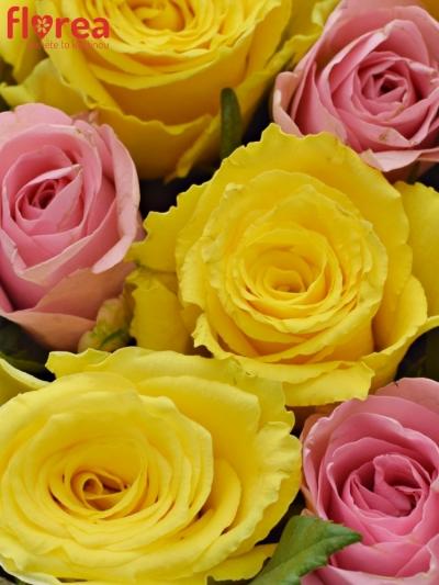 Krabička růží SHANILLA šampaň 19x9cm