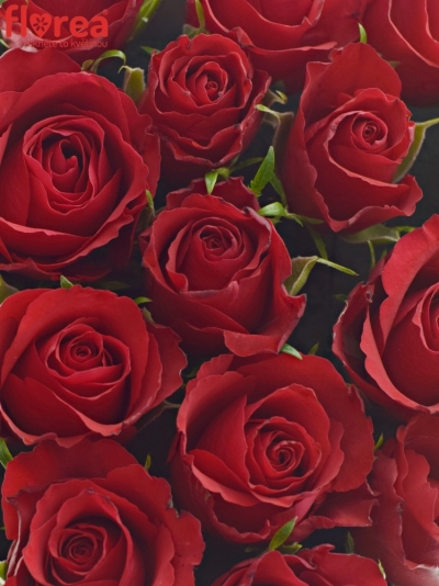 Krabička růží srdce champagne ADAIAH 18x7cm