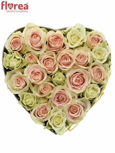 Krabička růží TWISTY FLAKE šampaň 15x8cm