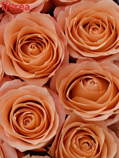 Krabička růžových růží LADY MARGARET modrá 19x9cm