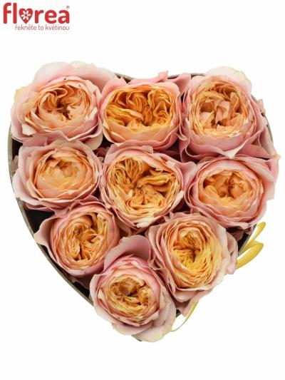 Krabička růžových růží VUVUZELA šampaň 15x8cm