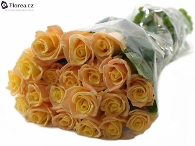 ROSA ALMAS+ 50cm