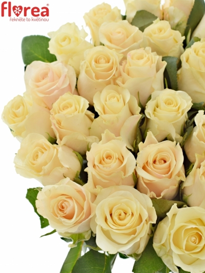 Krémová růže PEARL TACAZZI 40cm (L)