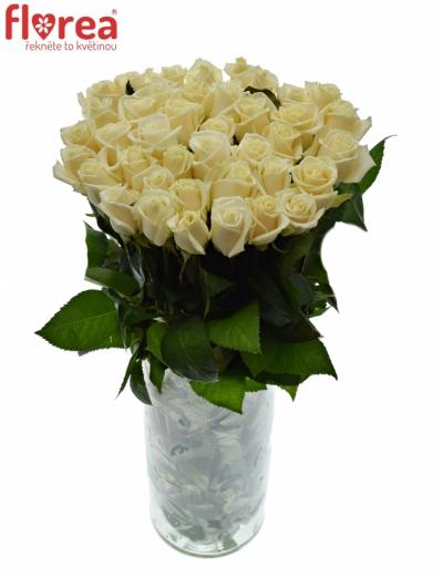 Krémová růže VENDELA 70cm