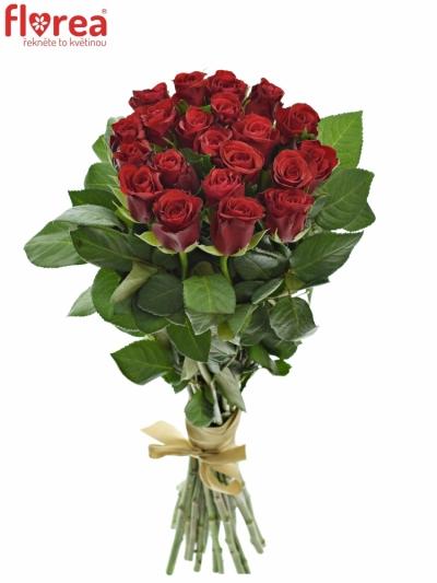 Kyice 21 červených růží RED RIBBON 60cm