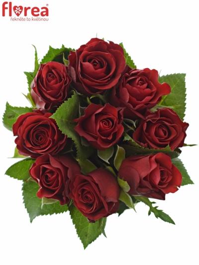 Kyice 9 červených růží RED RIBBON 50cm