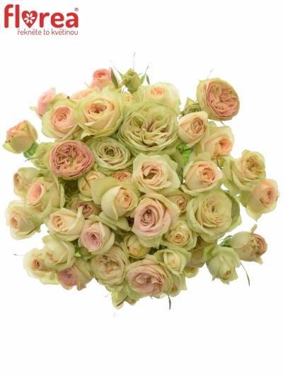 Kytice 10 trsových růží ROMANTIC PEPITA 40cm