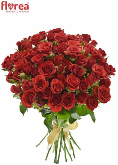 Kytice 100  květů růží DOMINICA 70cm