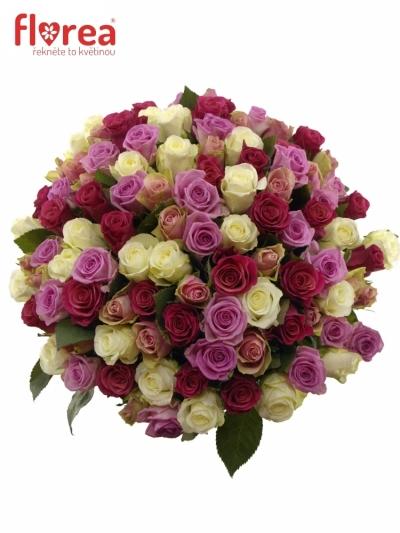 Kytice 100 míchaných růží AKILINA 50cm