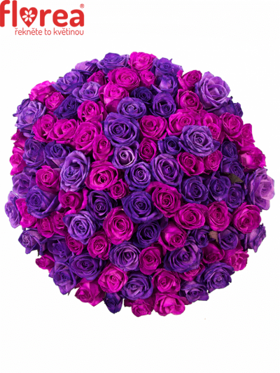 Kytice 100 barvených růží ABDERA