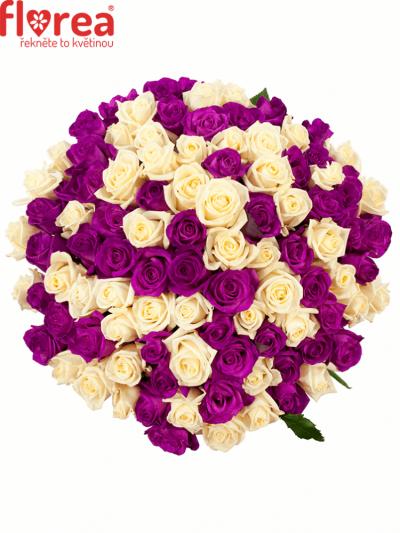 Kytice 100 barvených růží ATLANTA 50cm