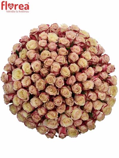 Kytice 100 bílorůžových růží ADVANCE SWEETNESS 50cm