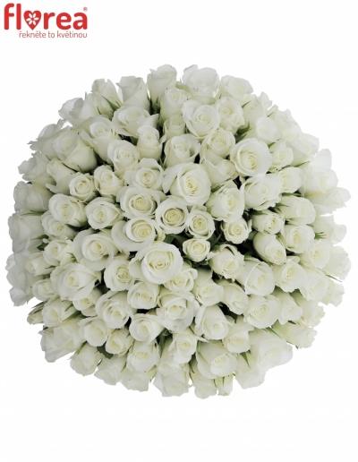 Kytice 100 bílých růží AKITO 50cm