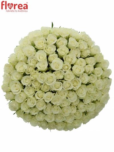 Kytice 100 bílých růží ASPEN 50cm