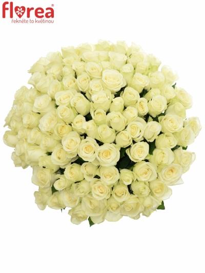 Kytice 100 bílých růží SNOWSTORM 50cm