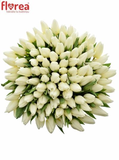 Kytice 100 bílých tulipánů ANTARCTICA