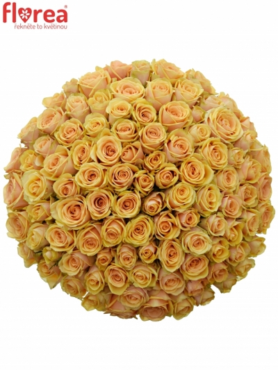 Kytice 100 čajových růží ALCHEMY