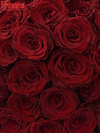 Kytice 100 červených růží ABBA