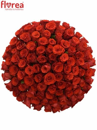 Kytice 100 červených růží BRIGHT TORCH