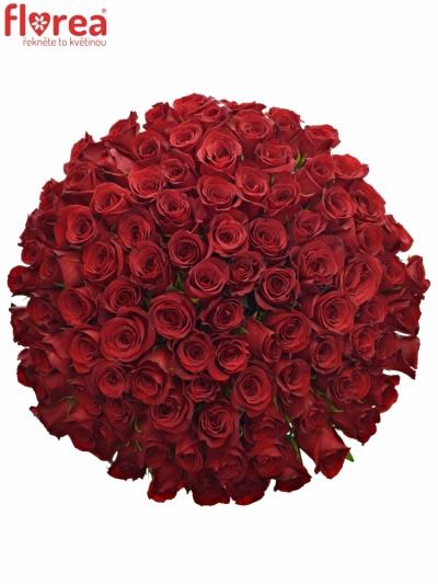 Kytice 100 červených růží FREEDOM