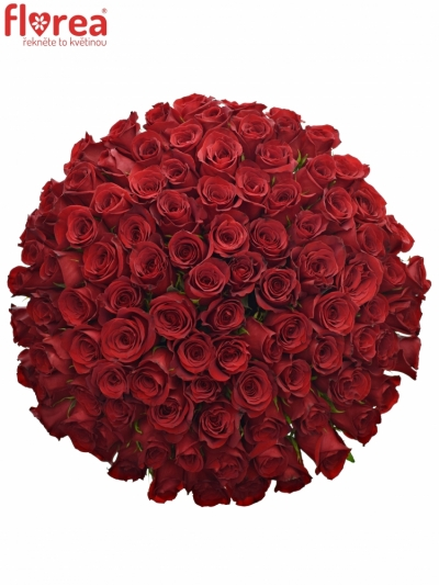 Kytice 100 červených růží  FREEDOM 90cm