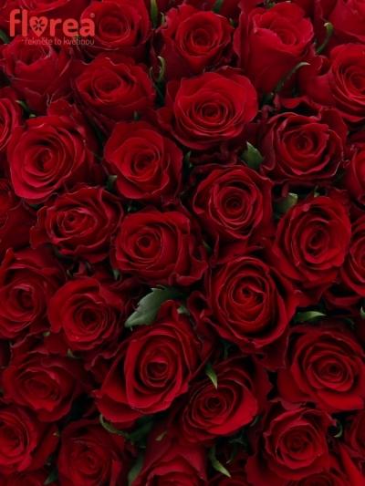 Kytice 100 červených růží NATURES RED