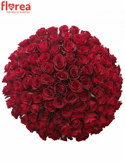 Kytice 100 červených růží NAZCA 40cm