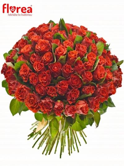 Kytice 100 červených růží RED CORVETTE 60cm