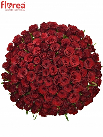 Kytice 100 červených růží RED DRAGON 60cm