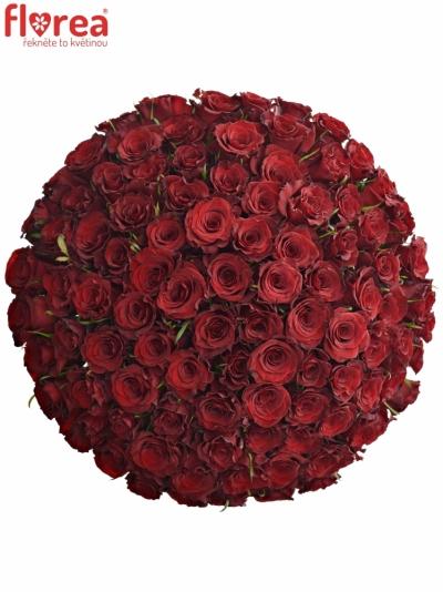 Kytice 100 červených růží RED RIBBON 50cm