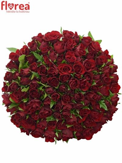 Kytice 100 červených růží RHYTHM 50cm
