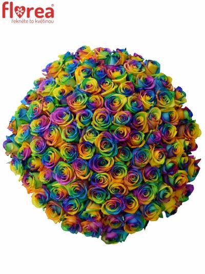 Kytice 100 duhových růží RAINBOW 65cm