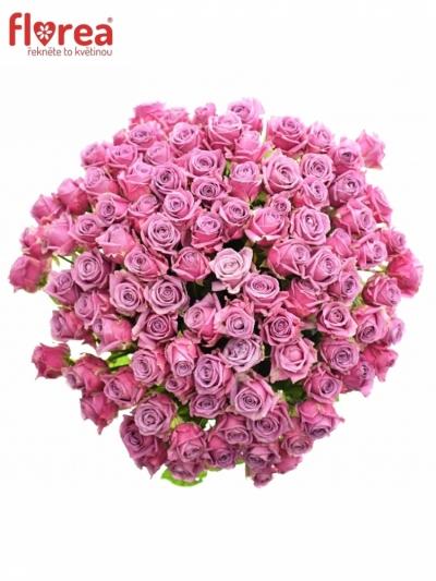 Kytice 100 modrofialových růží COOL WATER 50cm