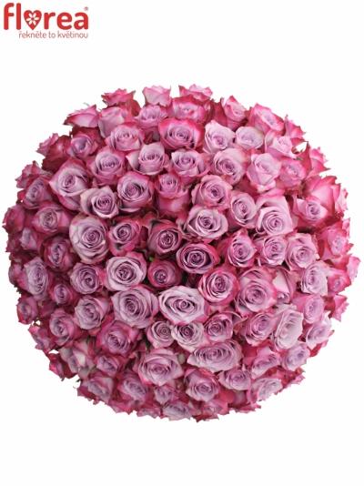 Kytice 100 fialových růží DEEP PURPLE 60cm