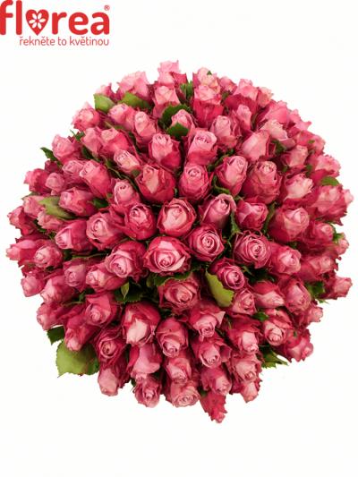 Kytice 100 fialových růží DEEP WATER 40cm