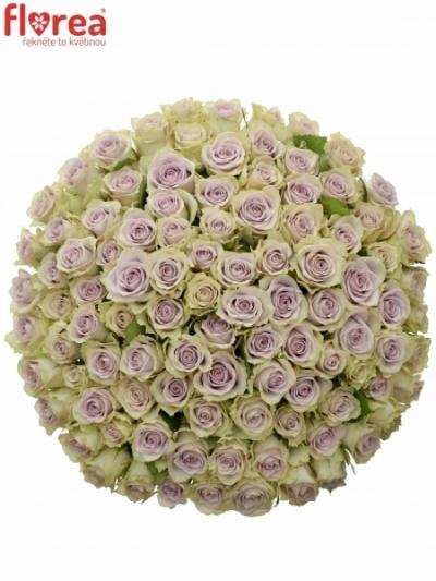 Kytice 100 fialových růží LULLABY