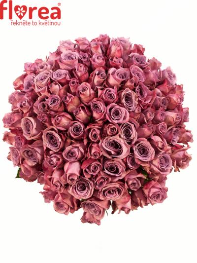 Kytice 100 fialových růží NEW ORLEANS 50cm