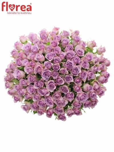 Kytice 100 fialových růží NIGHTINGALE 70cm