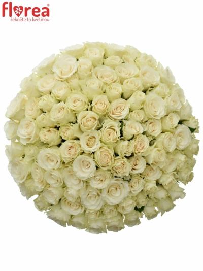 Kytice 100 světlekrémových růží SOLSY 50cm