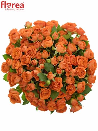 Kytice 100+ květů růží BABE 50cm