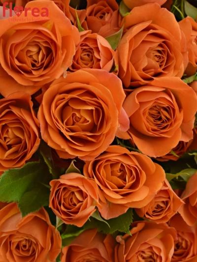 Kytice 100+ květů BABE 50cm