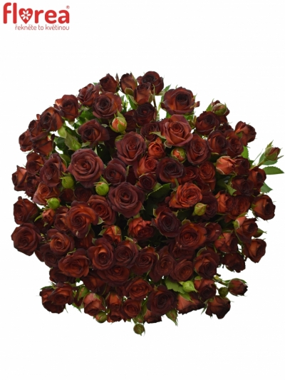 Kytice 100+ květů růží CHOCOCCINO 50cm