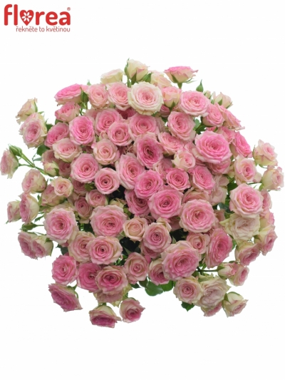 Kytice 100+ květů růží CREAMY TWISTER 50cm