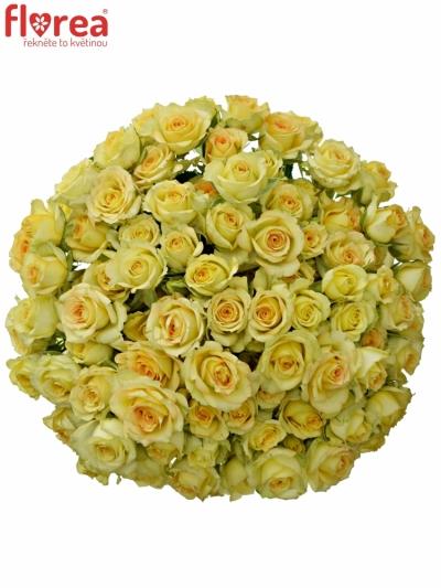 Kytice 100+ květů růží ESTEVANA 40cm