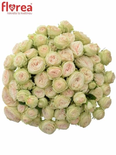 Kytice 100+ květů růží GALINA 40cm