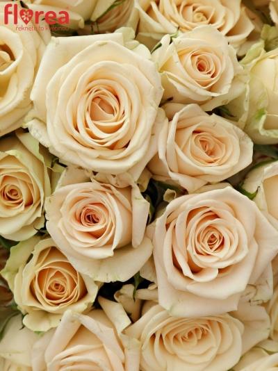 Kytice 100+ květů růží JANA 40cm
