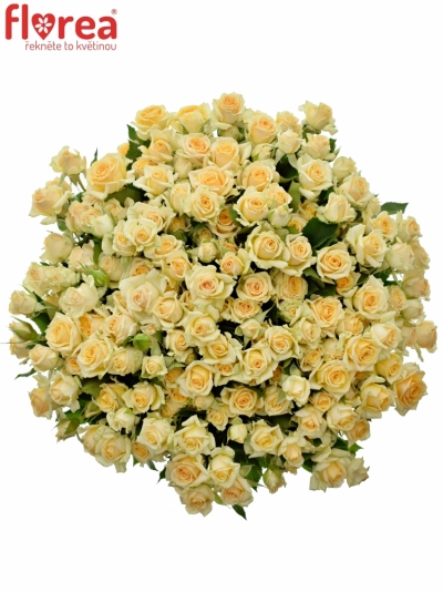 Kytice 100+ květů růží JELENA 40cm