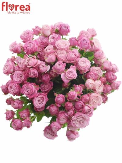 Kytice 100+ květů růží LADY BOMBASTIC 60cm