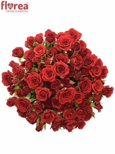 Kytice 100+ květů růží MIRABEL 40cm