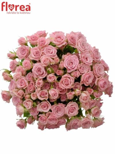 Kytice 100+ květů růží ODILIA 50cm